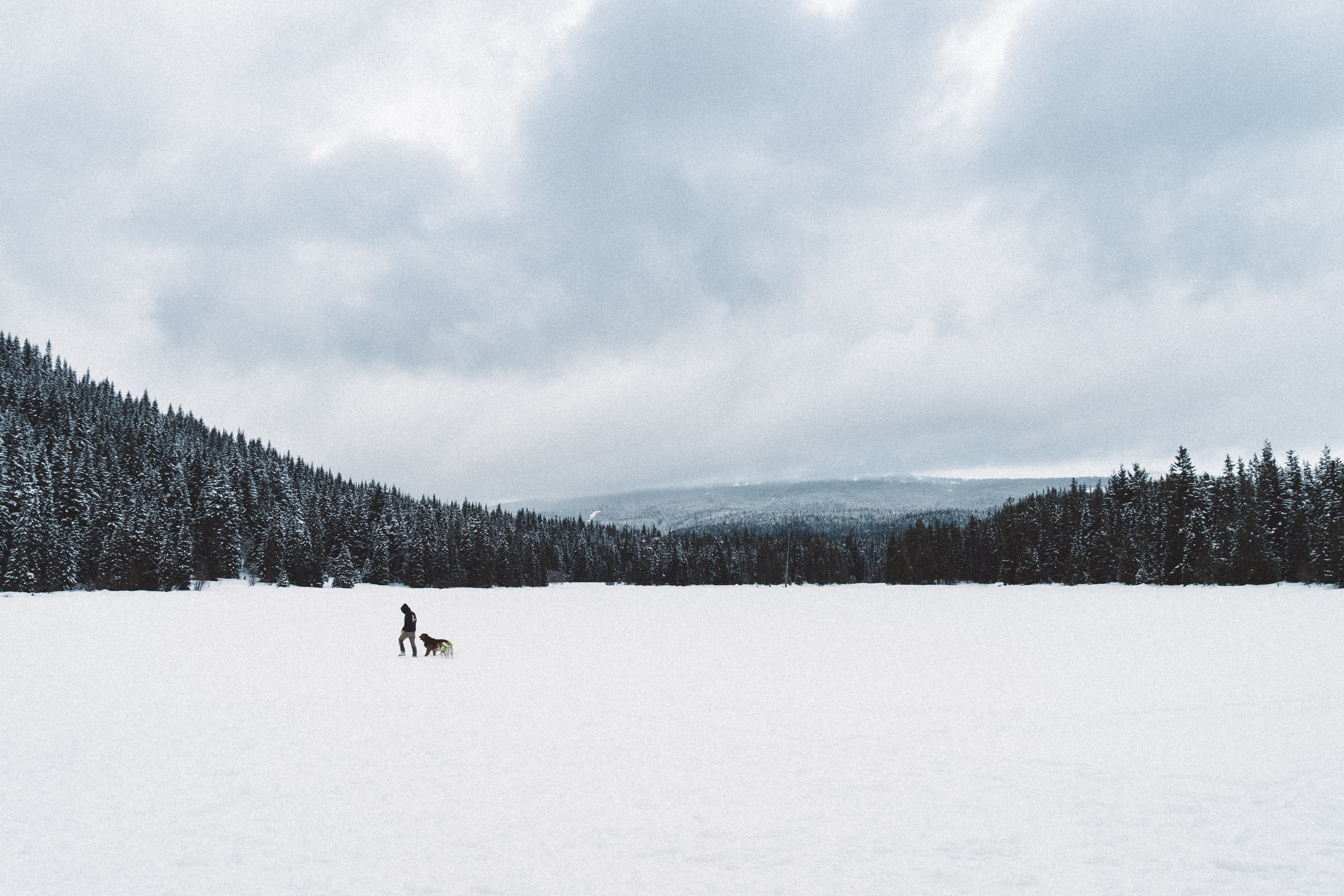 A person walking with their dog across the snow covered Trillium Lake