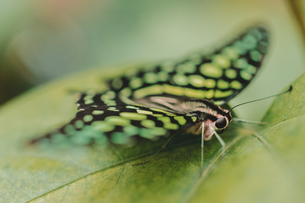 close up photography of butterfly perching on green leaf