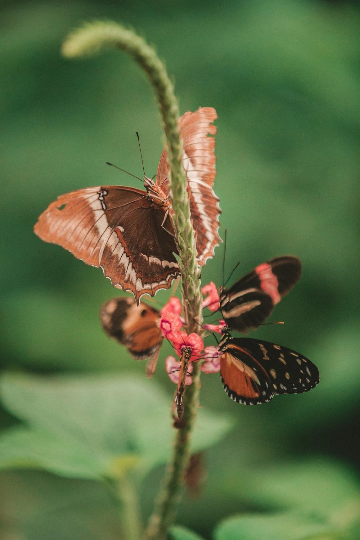 macro photography three brown butterflies