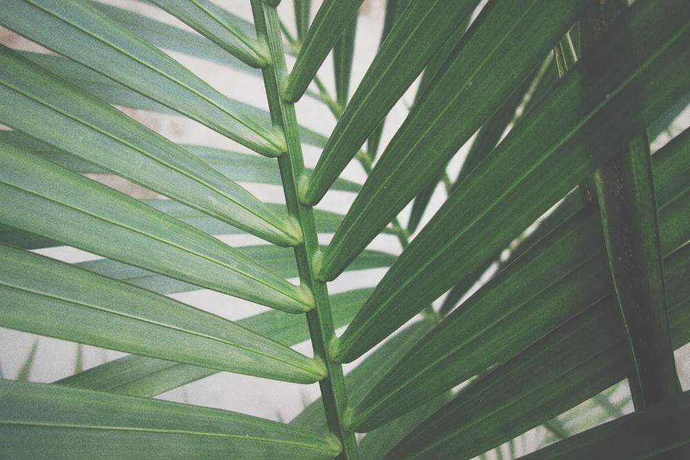 green linear leaf