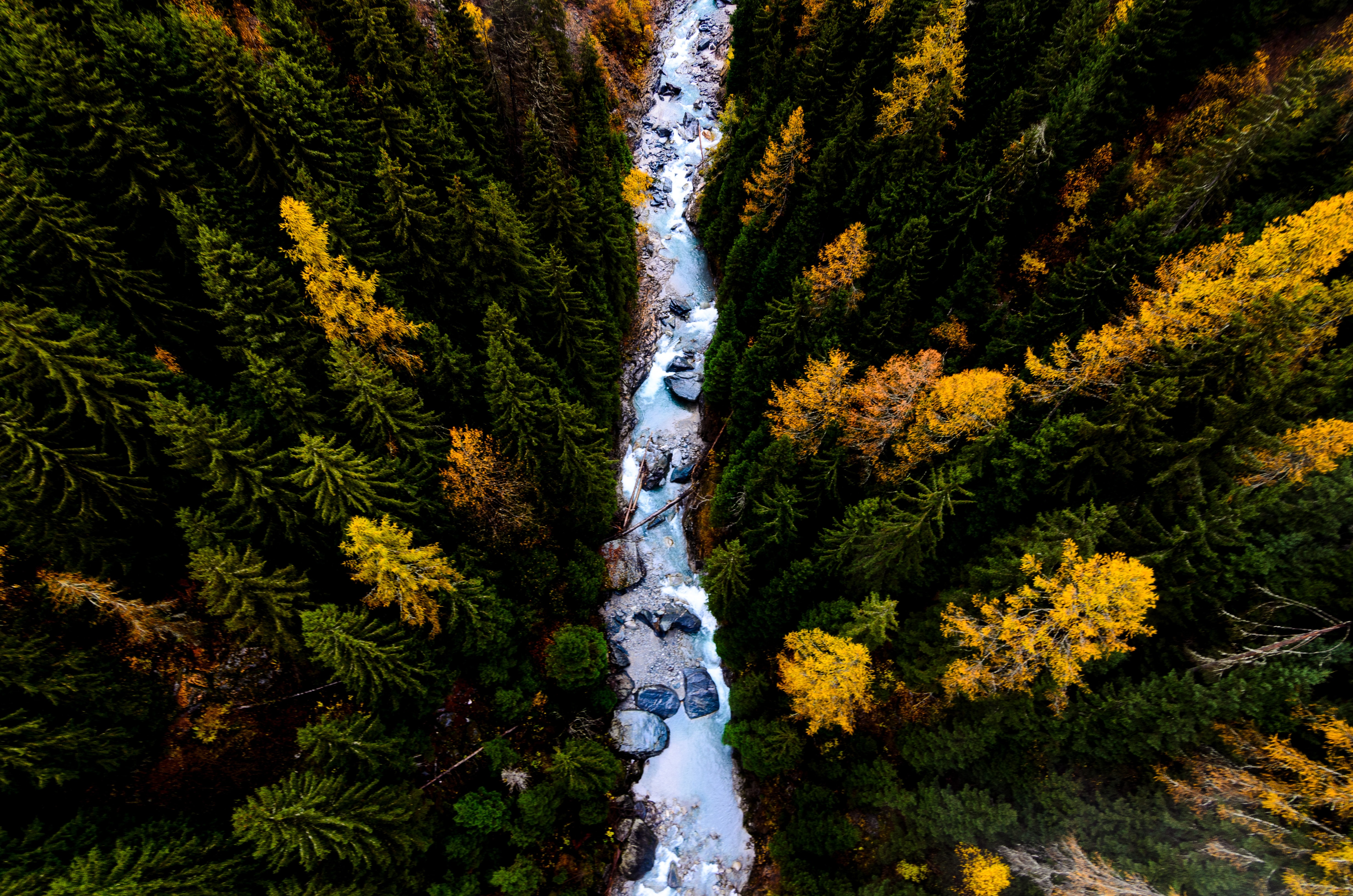 A drone view of evergreen trees and a stream in Mühlebach VS