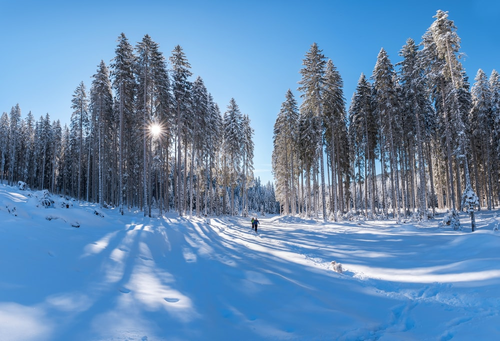 two persons walking on forest trail covered with snow