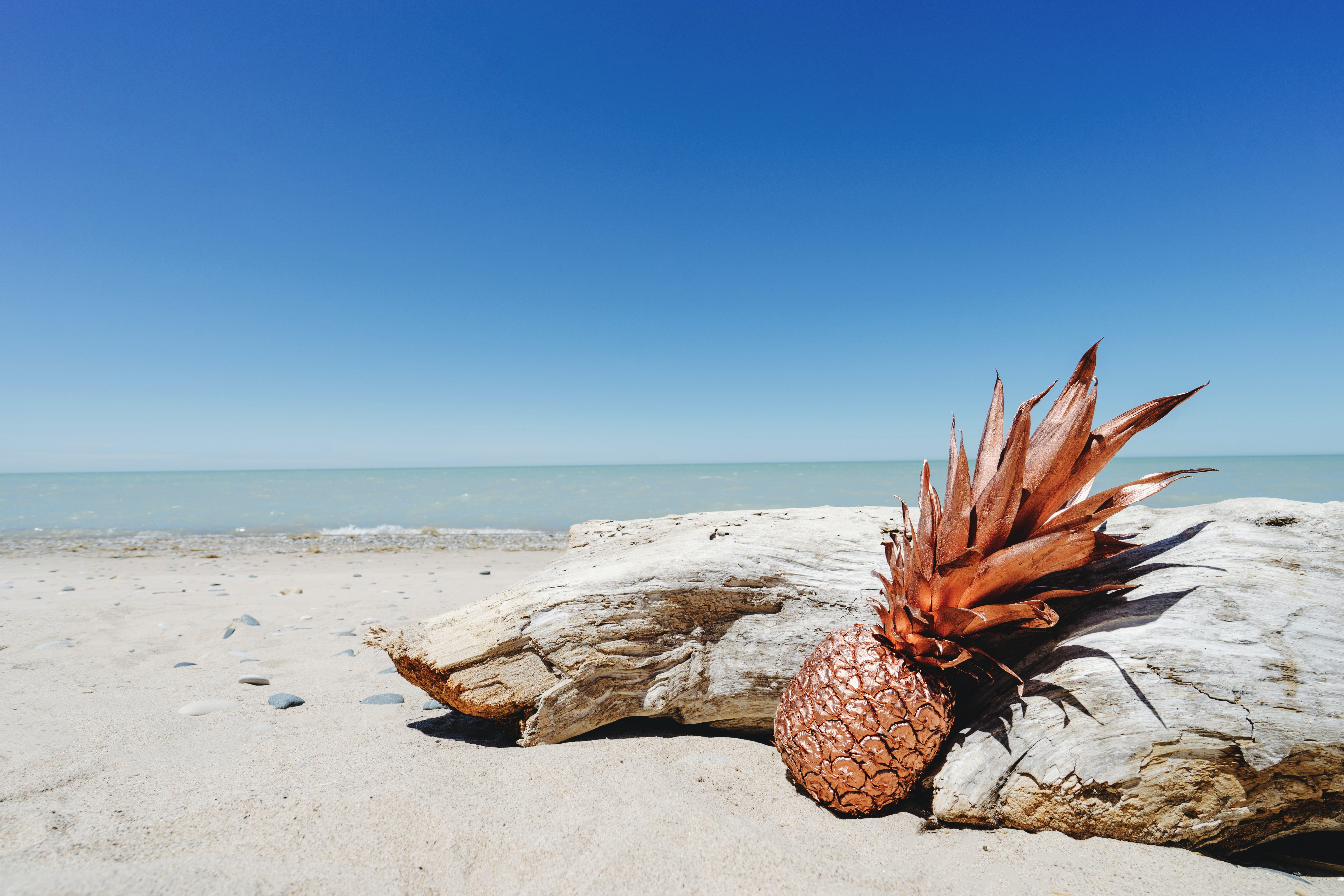 pineapple learning on gray wood trunk near shore at daytime