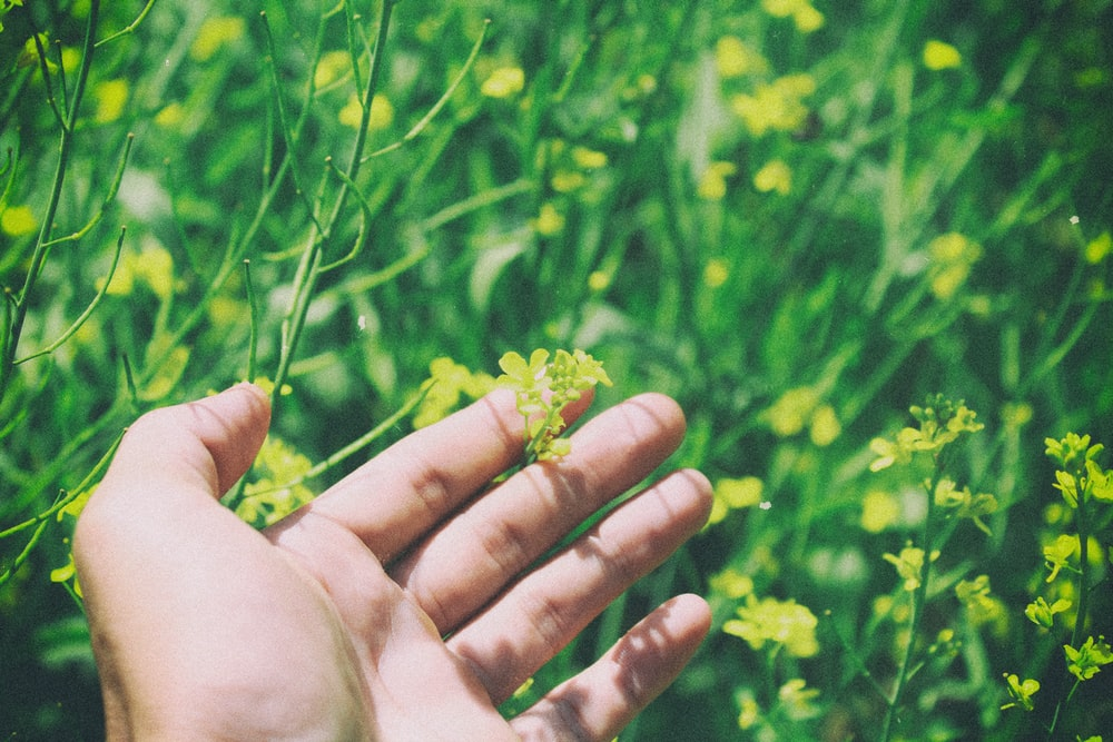 shallow focus photography of person holding yellow flower plant