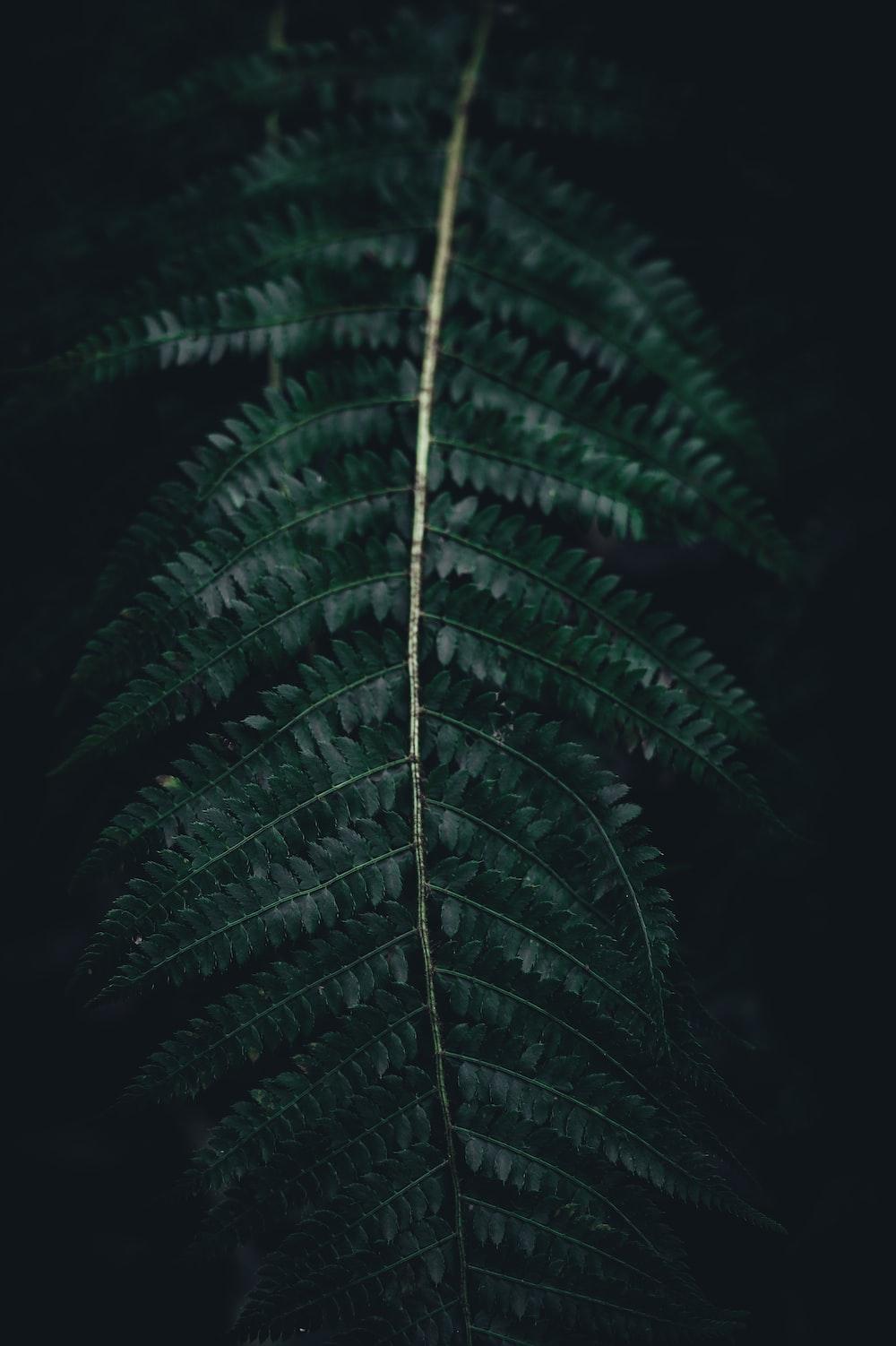 tilt shift lens photo of green plants