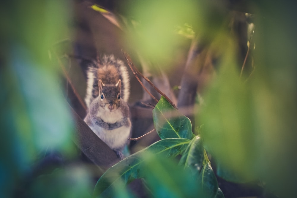 gray squirrel surrounded by leaves