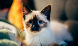 WINPRO Pet Closes on $3M+ Series B Round, Poised for Growth and New...