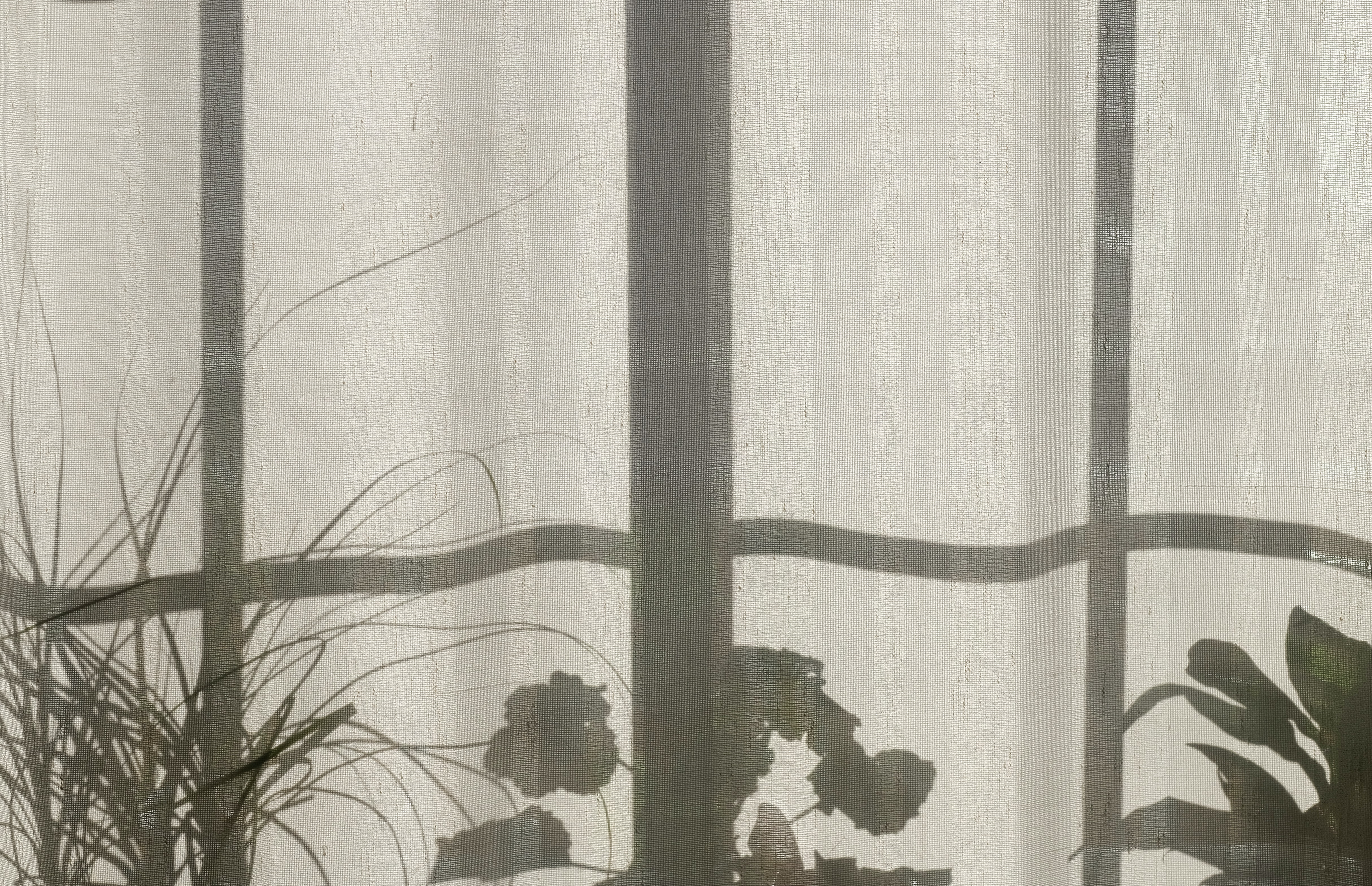 Shadow of the window frame and plants in pots on the white curtain in Nordfjordeid