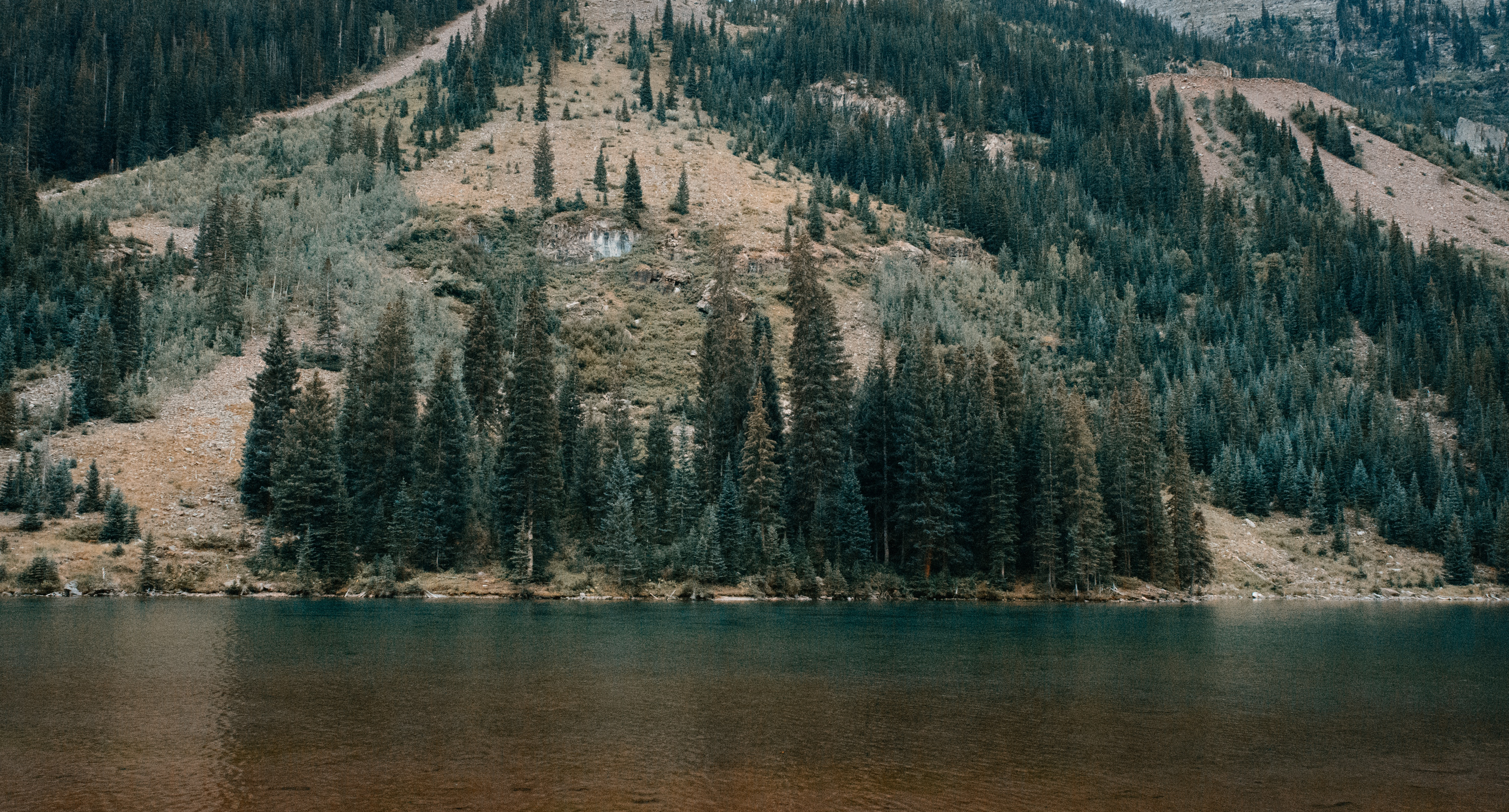 Clumps of evergreen trees on a lakeshore in Aspen
