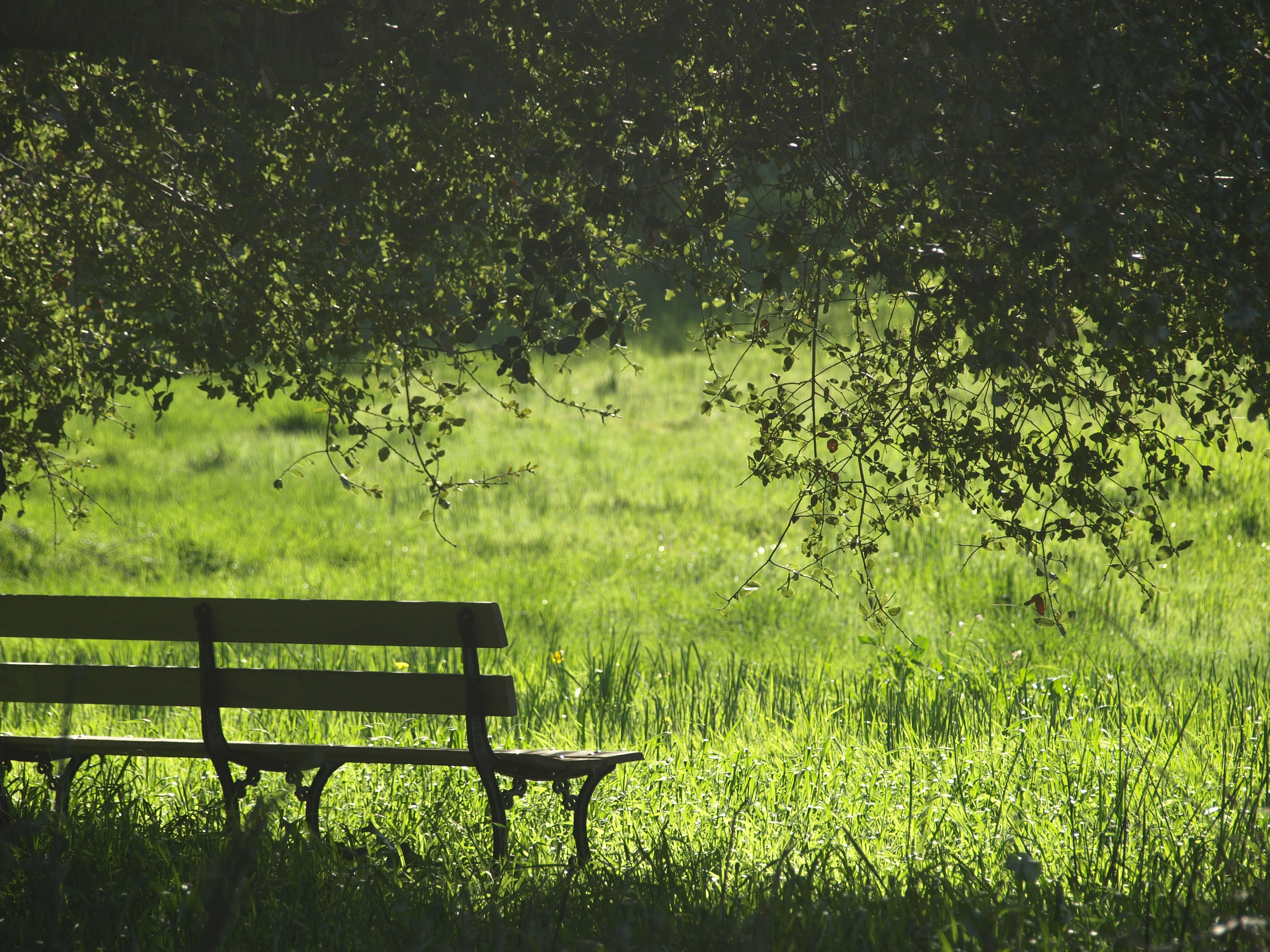 Grass, park bench, bench and tree HD photo by Olesya ...
