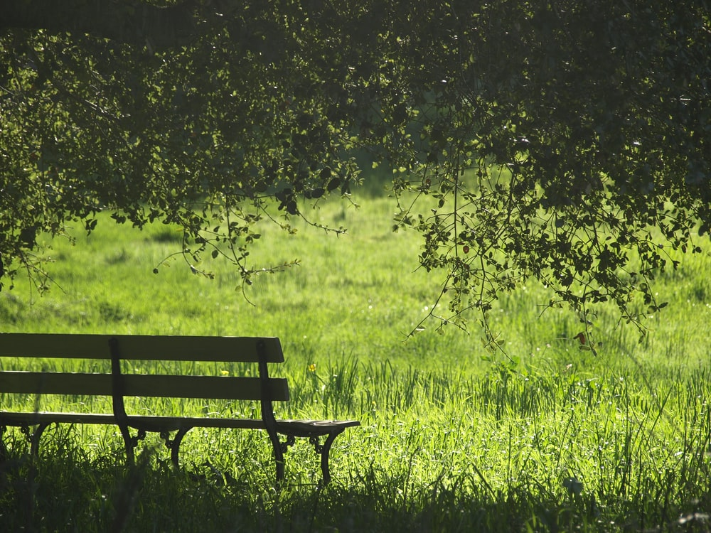 brown and black wooden bench beside green grass