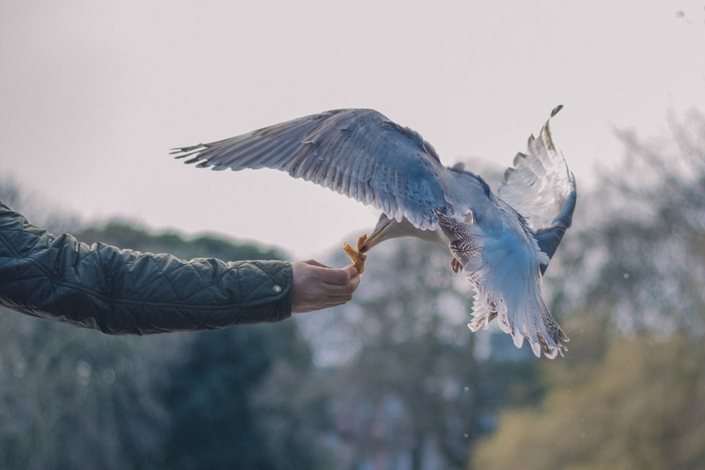 bird perching on person's hand