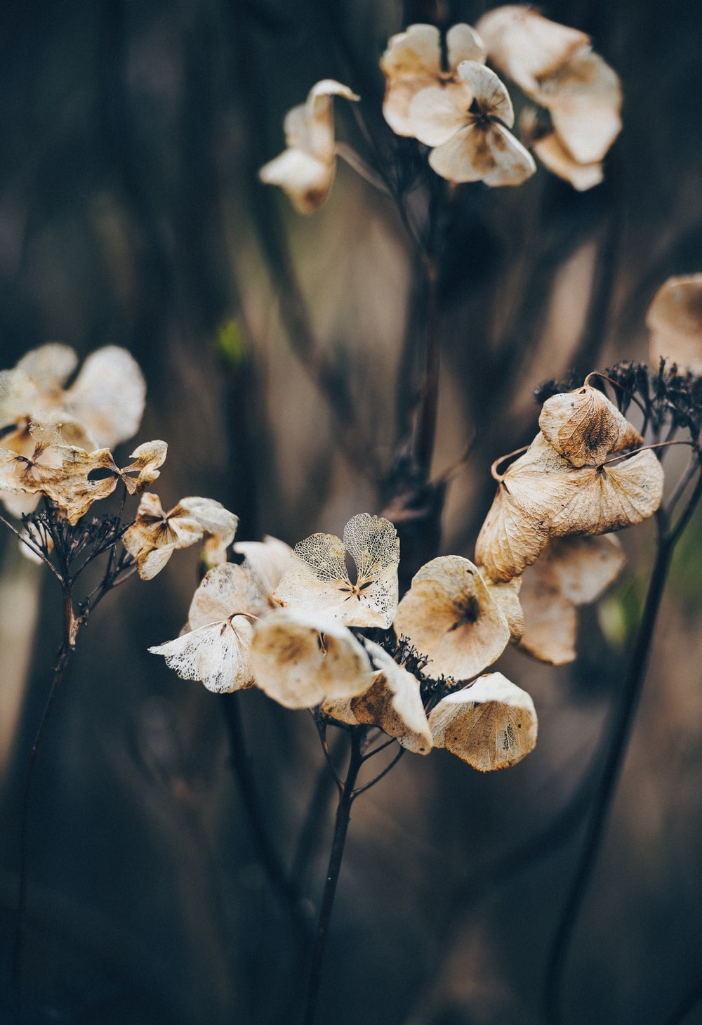 macro photography of dried flowers