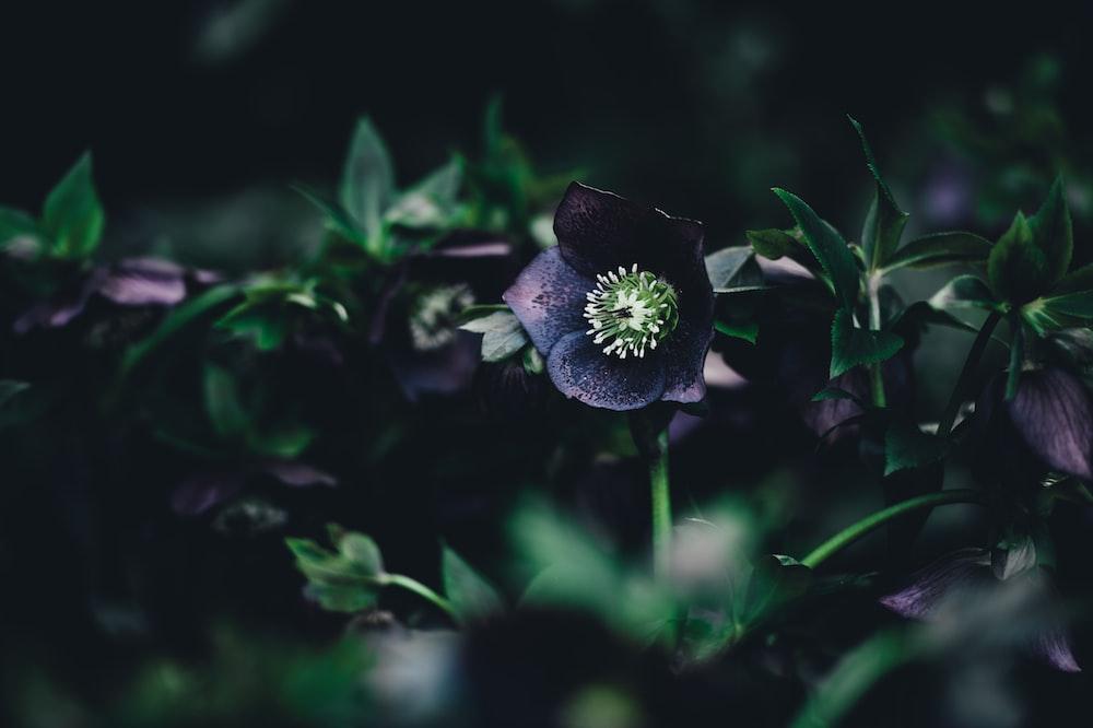 shallow focus photography of purple petaled flower