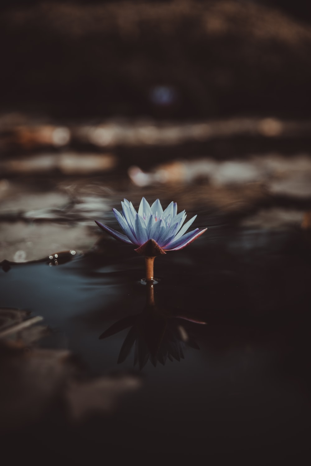 shallow focus photography of green lotus on body of water
