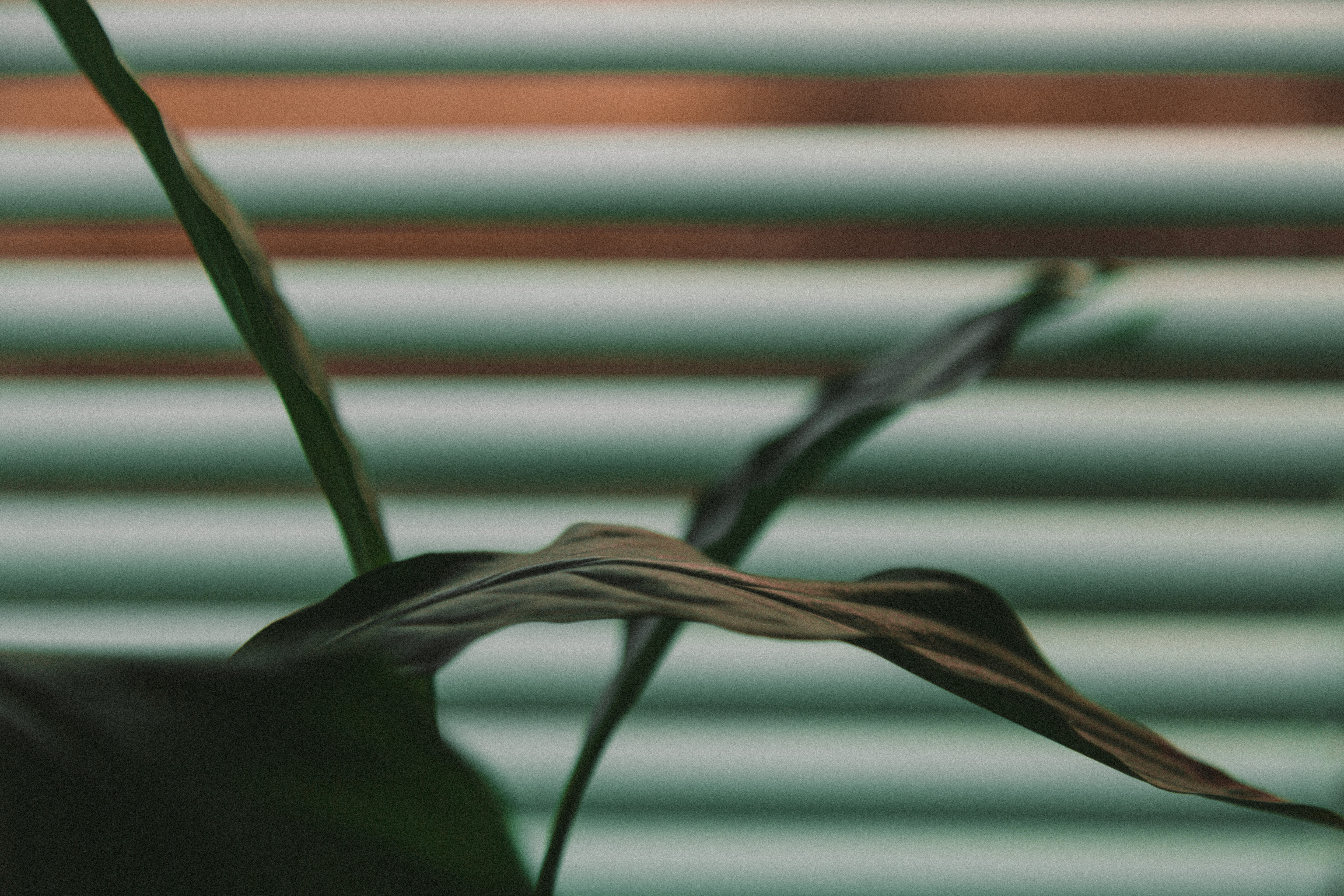 shallow focus photography of green leaf with window blind background