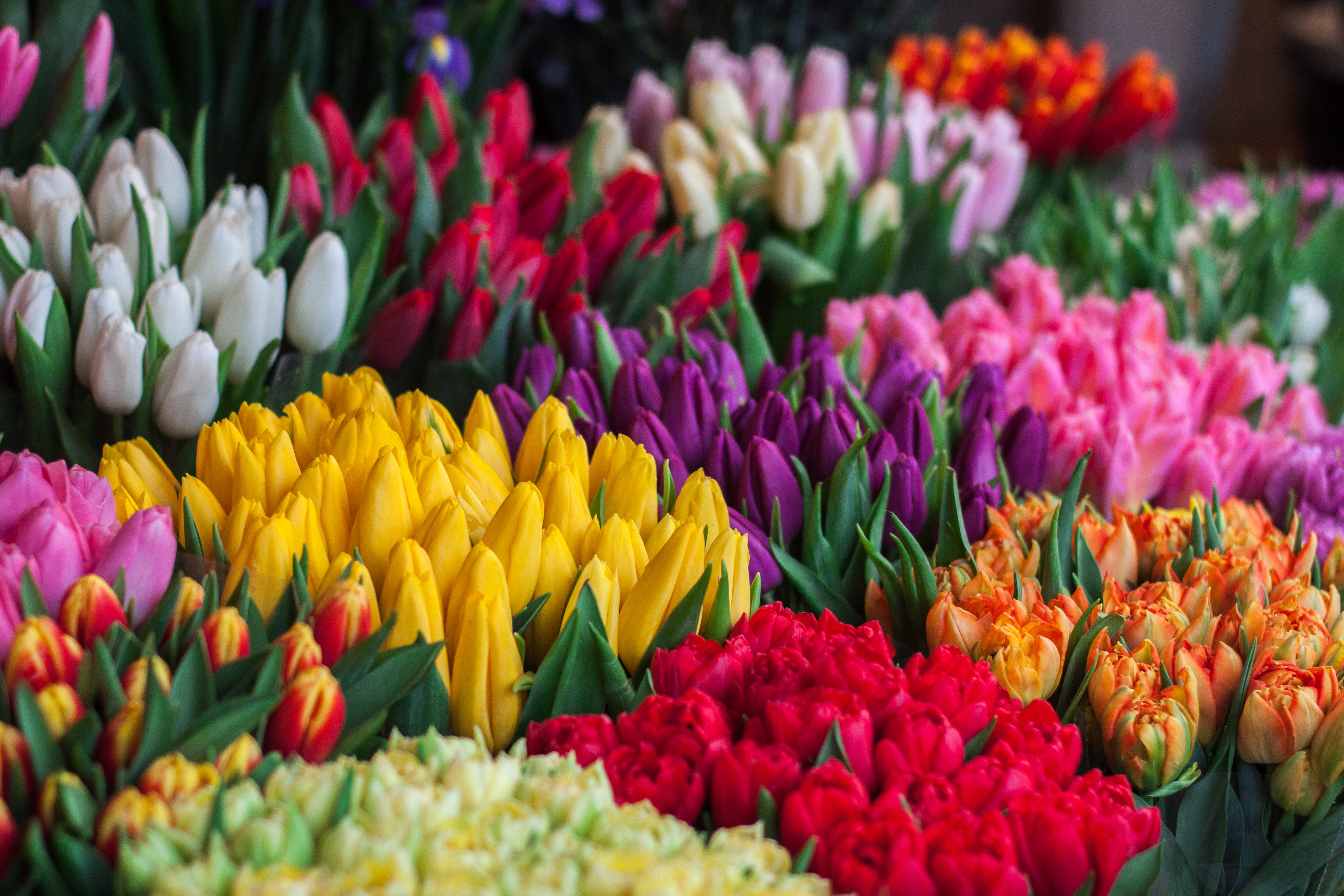 Colorful tulip bouquets at flower stall in Spring, Strysky I rynok