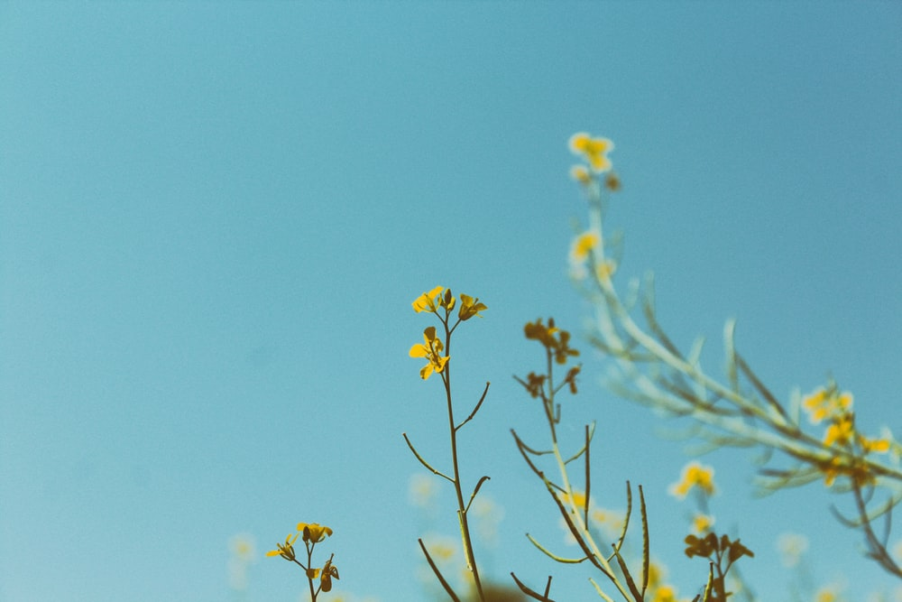 portrait photography of yellow petaled flower