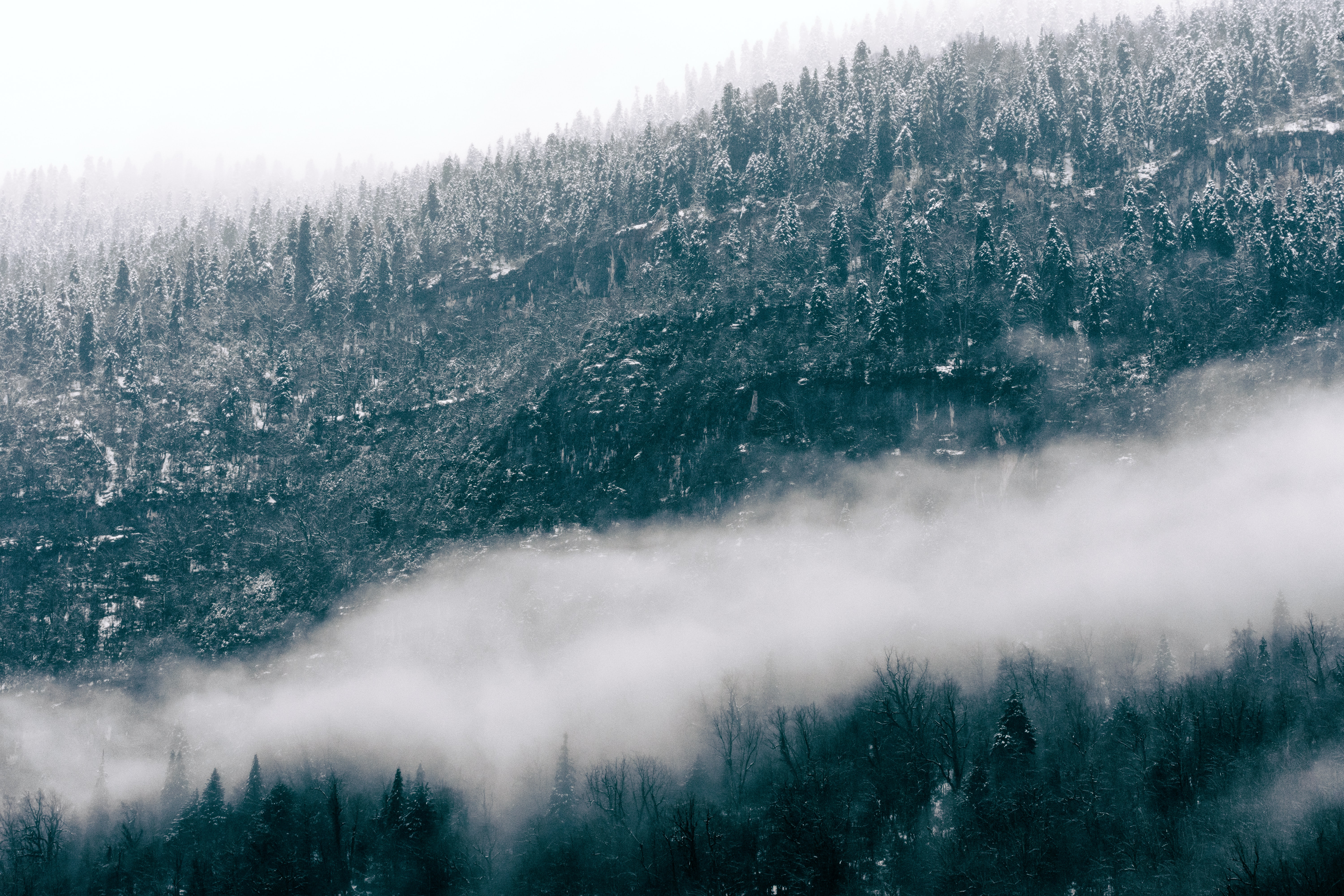 A cloud of fog over a snowy forest in Abkhazia