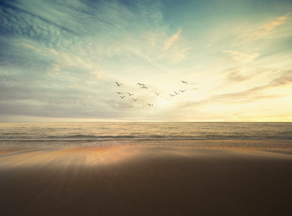 flying flock of bird under cloudy sky