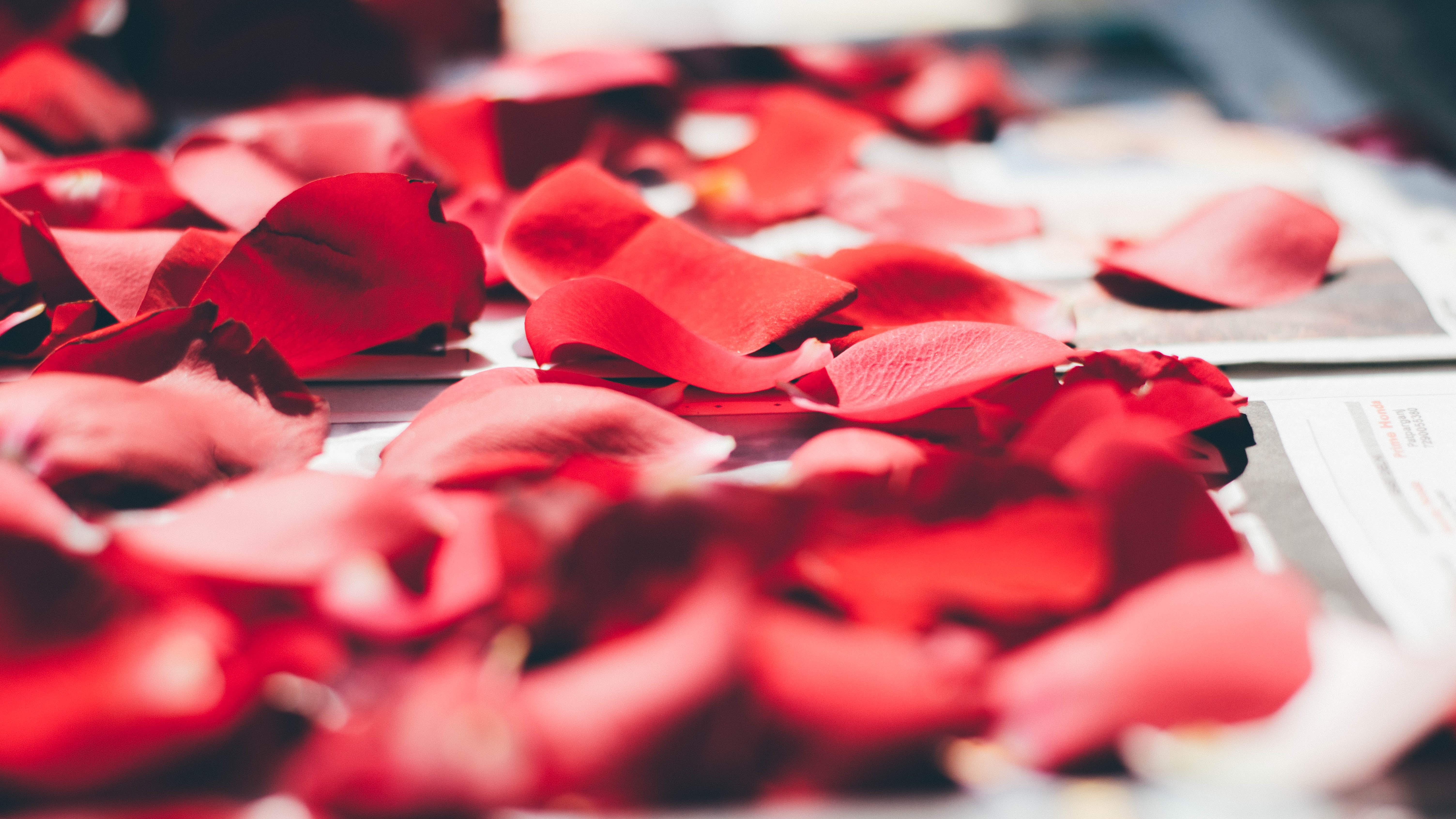rose petals on top of white printed paper