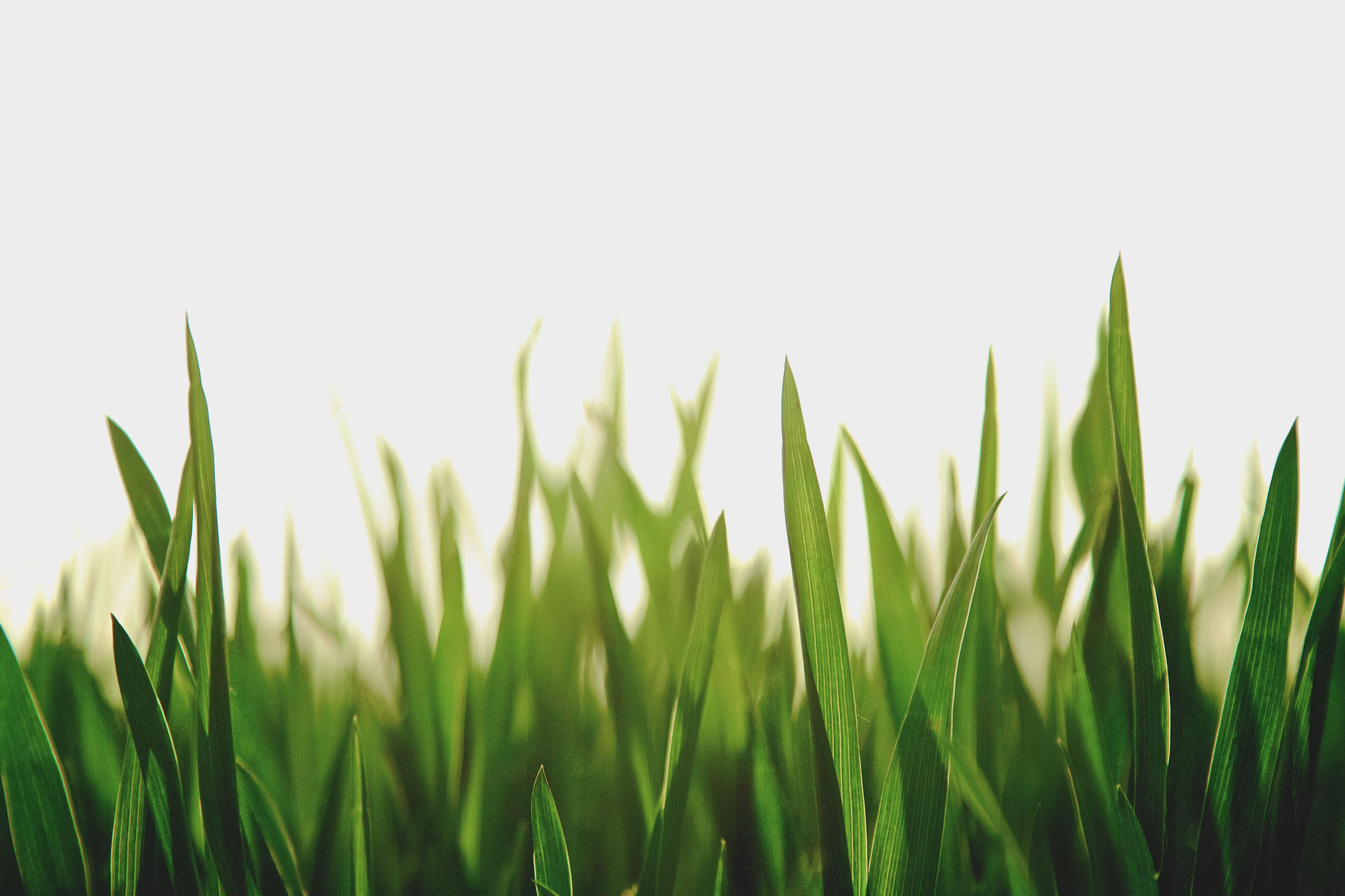closeup photography of green grassfield