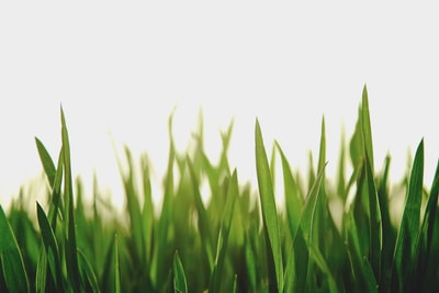 closeup photography of green grassfield green zoom background
