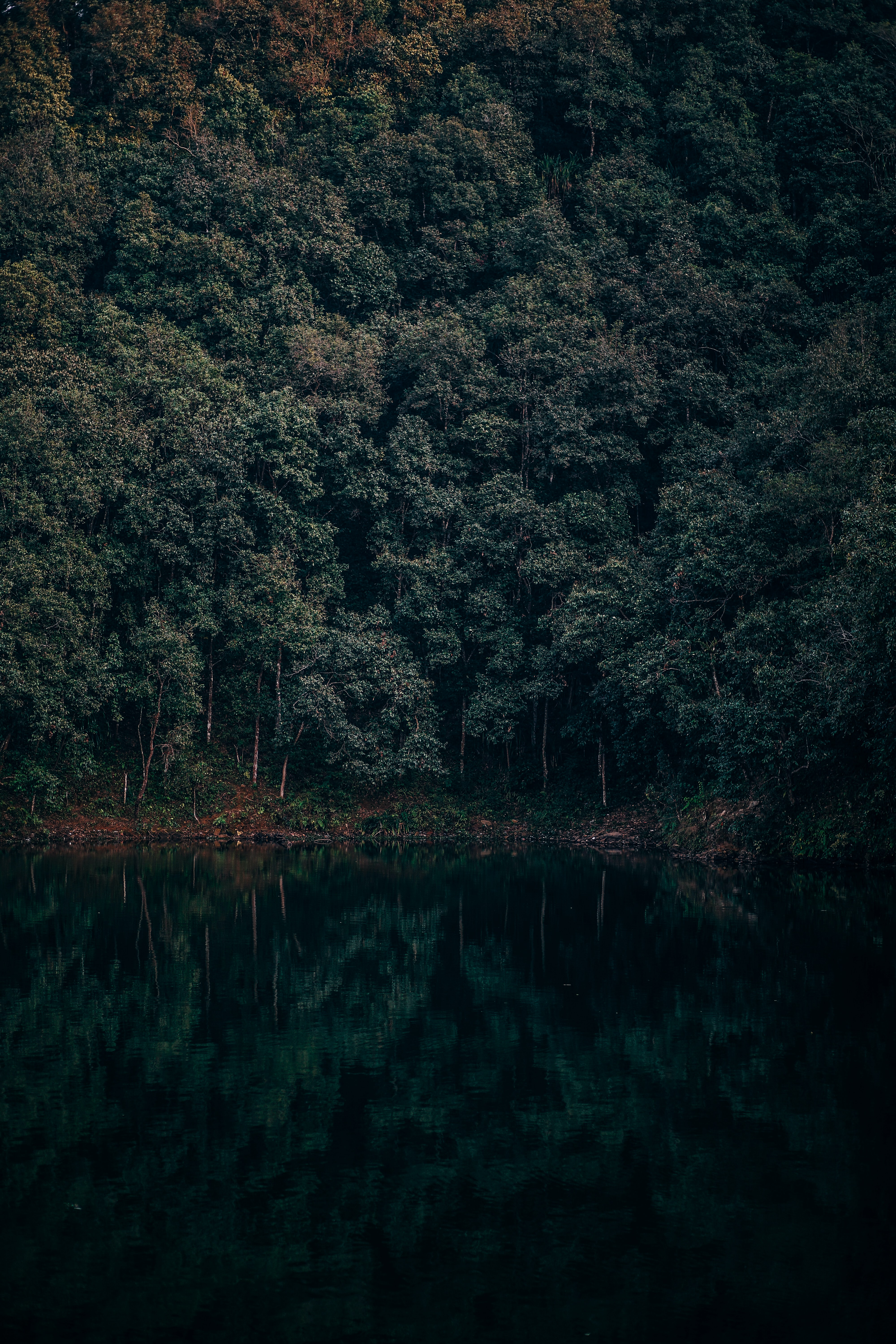 landscape photography of green forest and lake