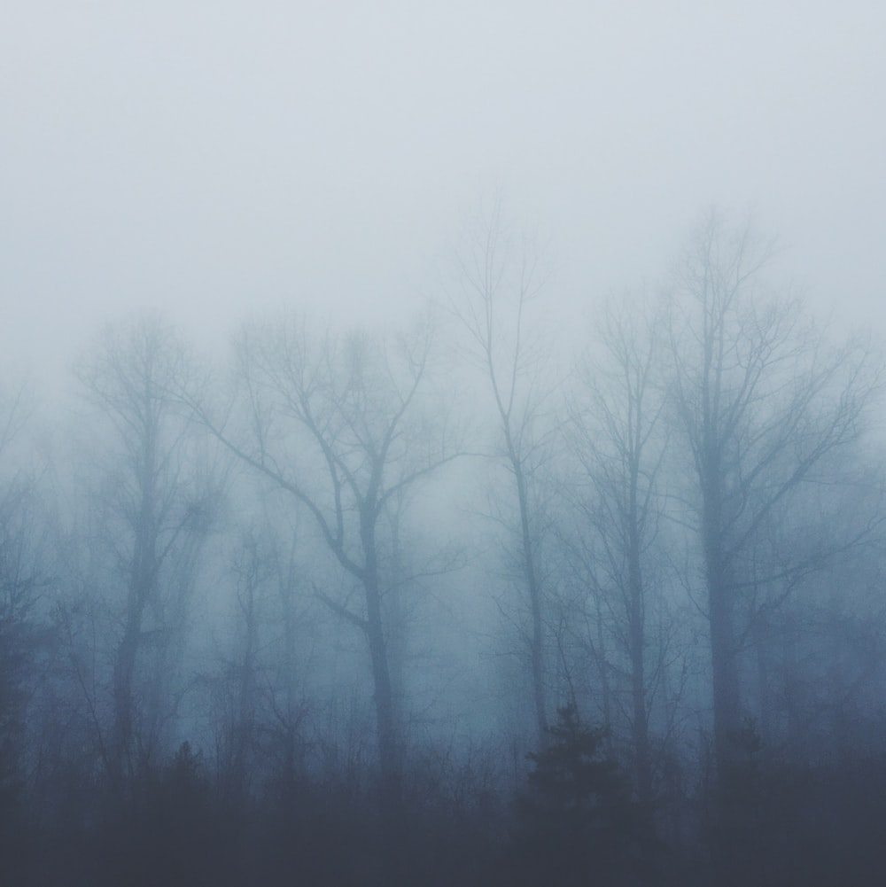 bare trees covered with fog