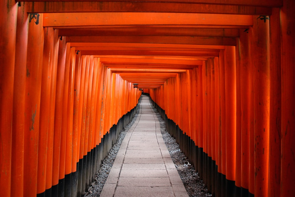 architectural photography of red wooden tori gate