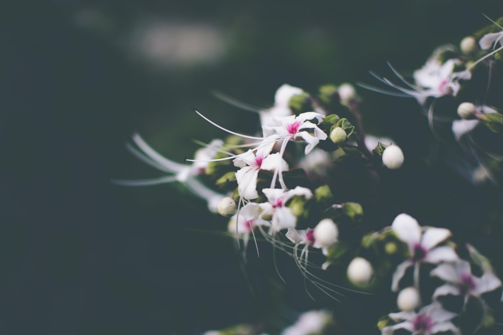 white petaled flowers in closeup photography
