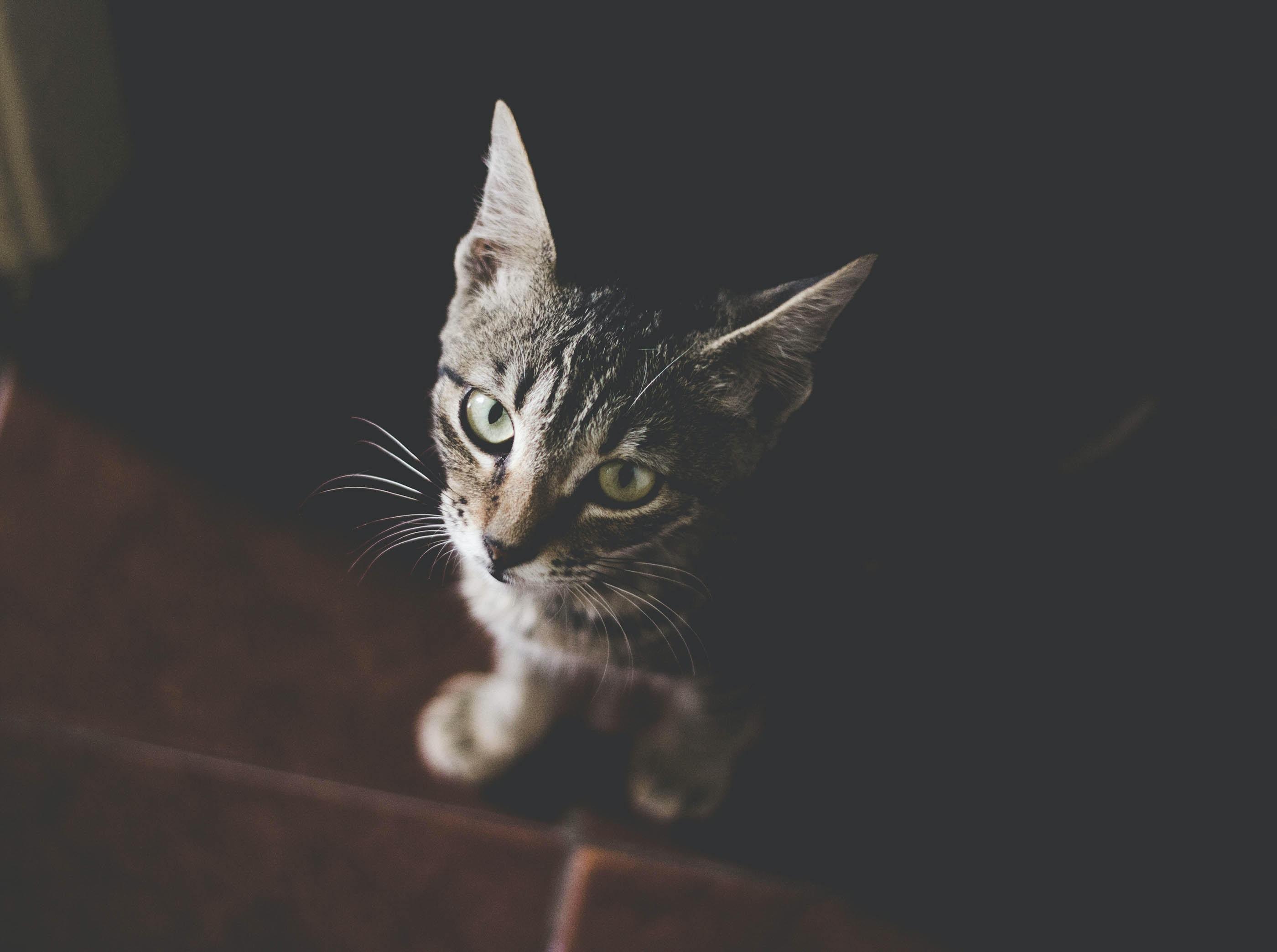 A dim high-angle shot of a tabby cat