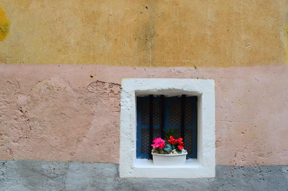 pink petaled flower near window at daytime