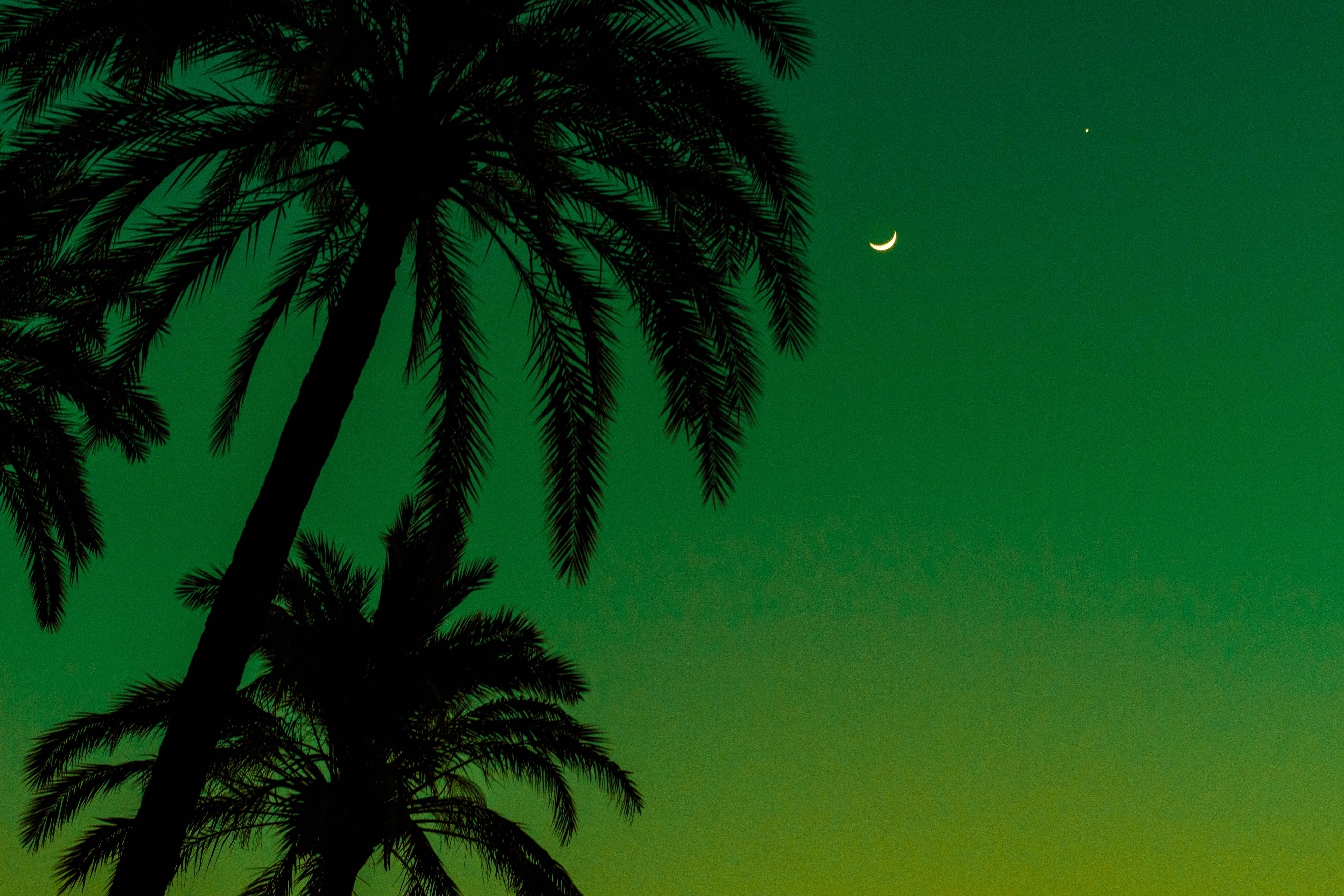Palm trees silhouetted against a green sky with a crescent moon over Parque de Maria Luisa