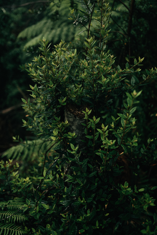 green leafed plant near green leafed plant