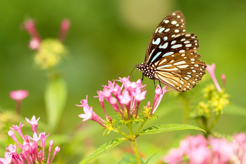 butterfly in flower during daytime