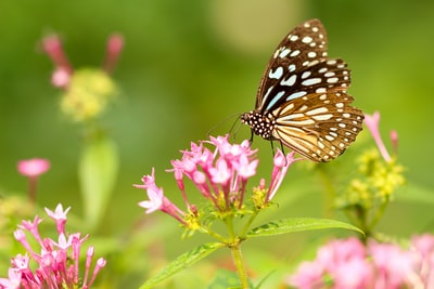 butterfly in flower during daytime spring teams background