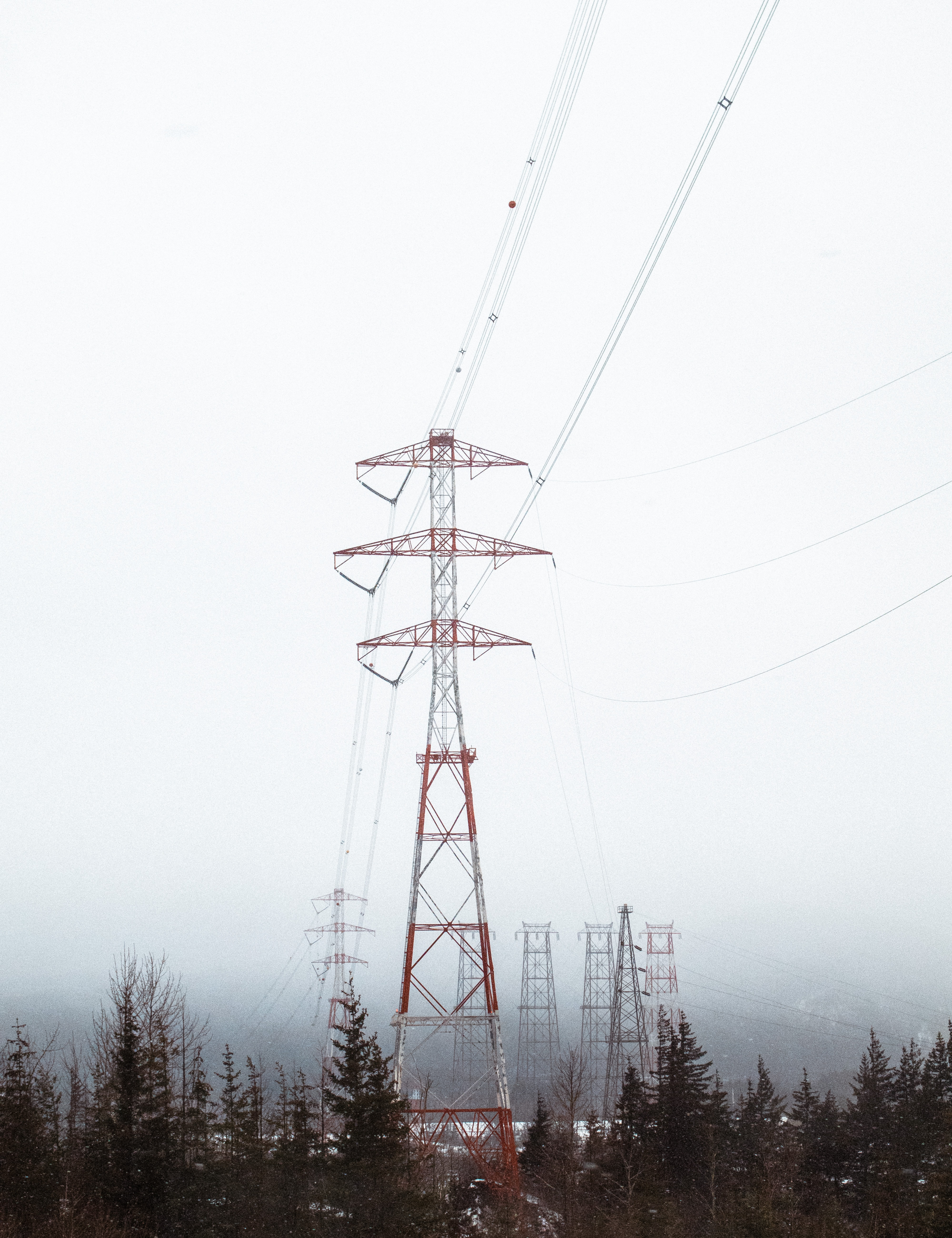 Powerlines amid a pine forest on a foggy winter day