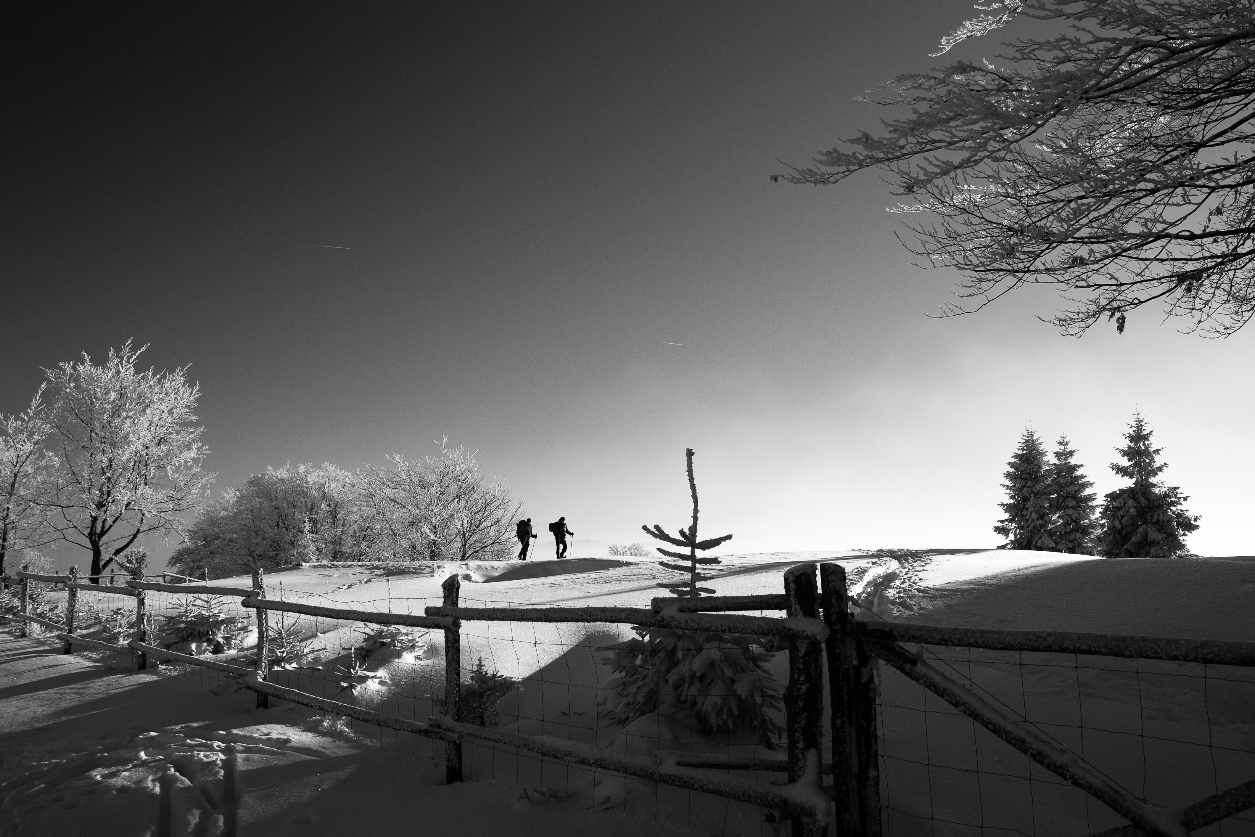 View from the fence of two men hiking on a tree-laden snowy path