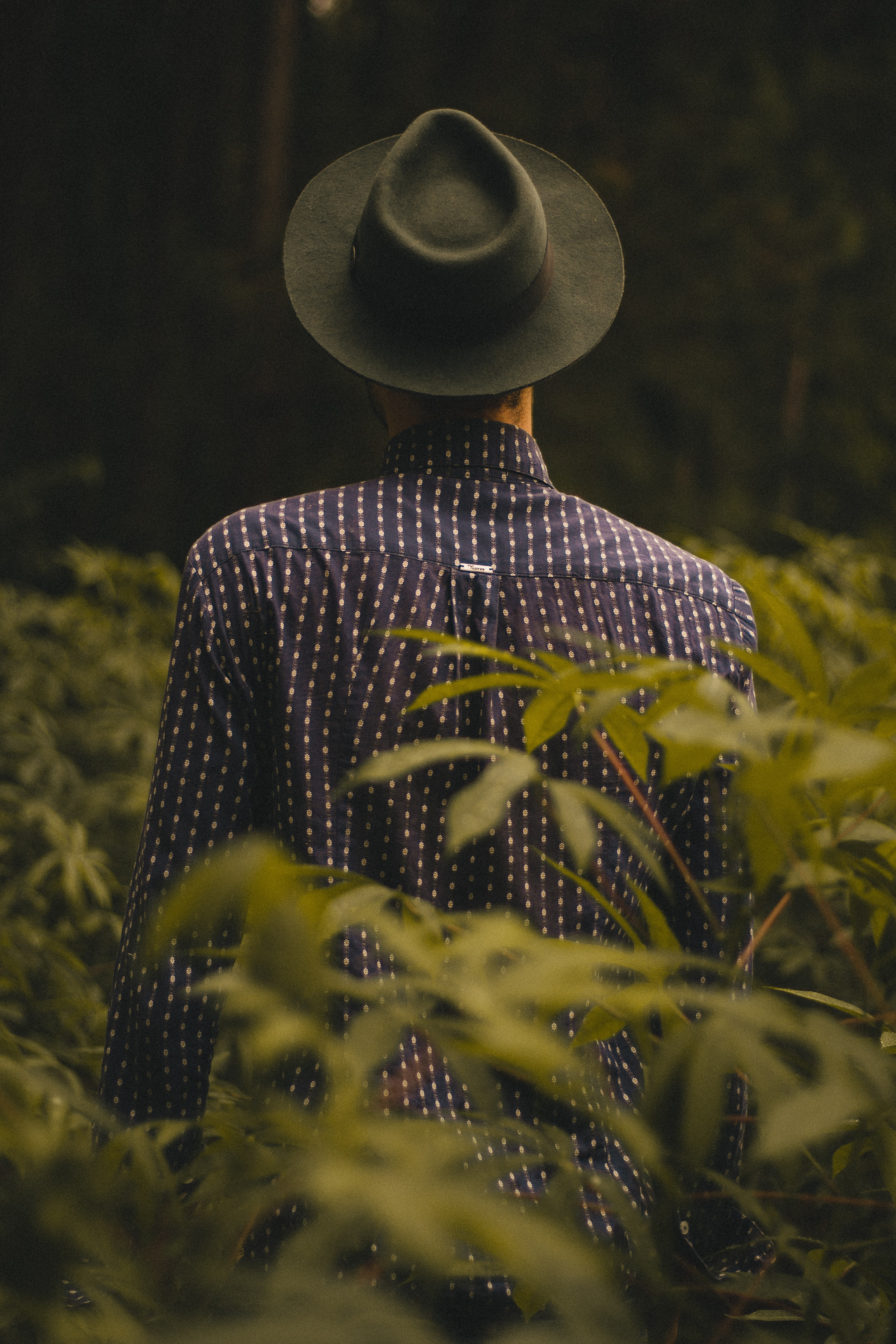 A person wearing a hat faces away from the camera among tall plants