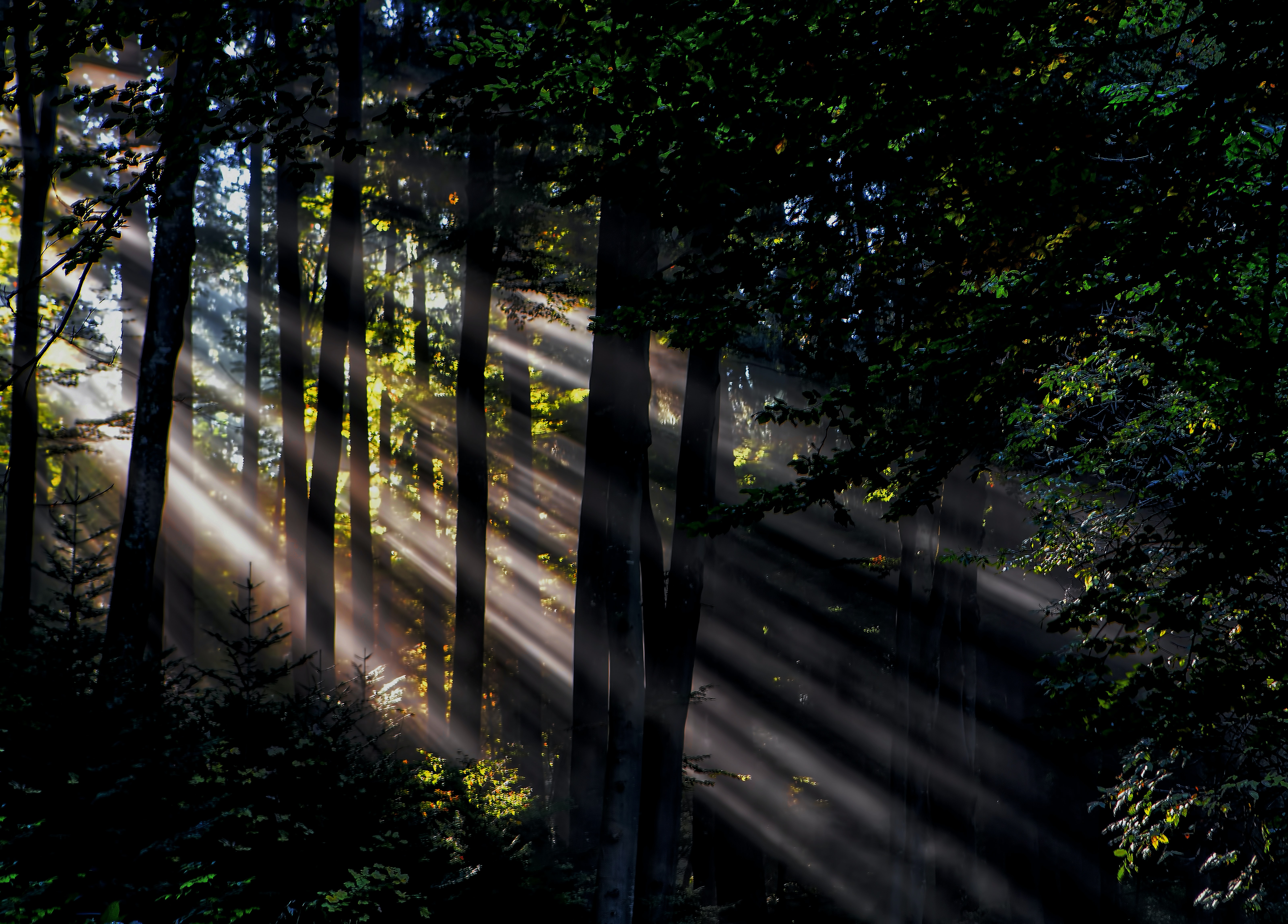 sunlight rays in forest