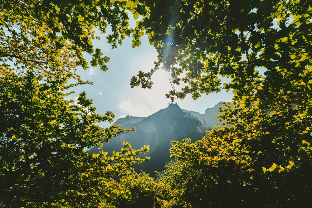 green leaf trees near mountain at daytime