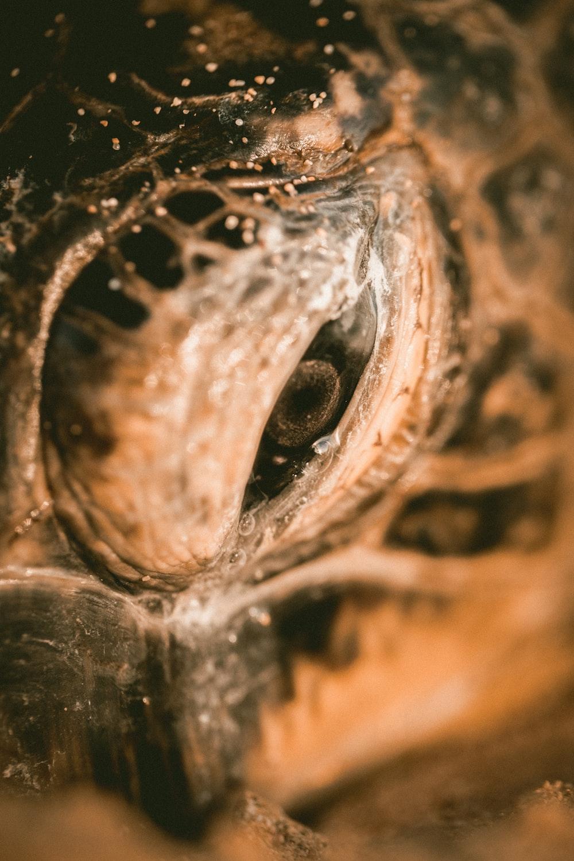 eye of sea turtle