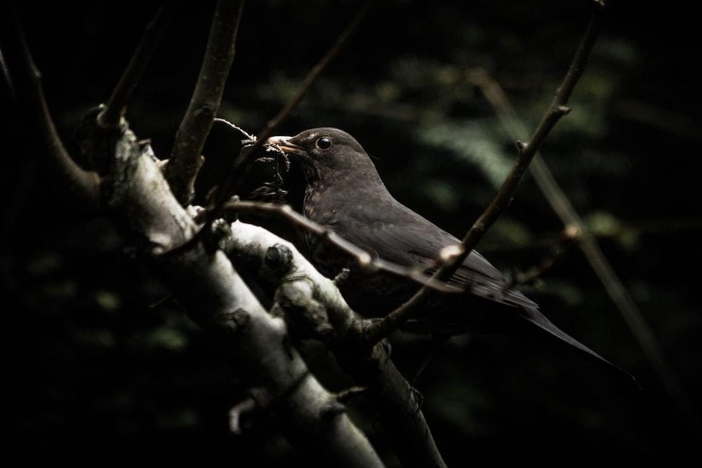 black bird perching on brown tree