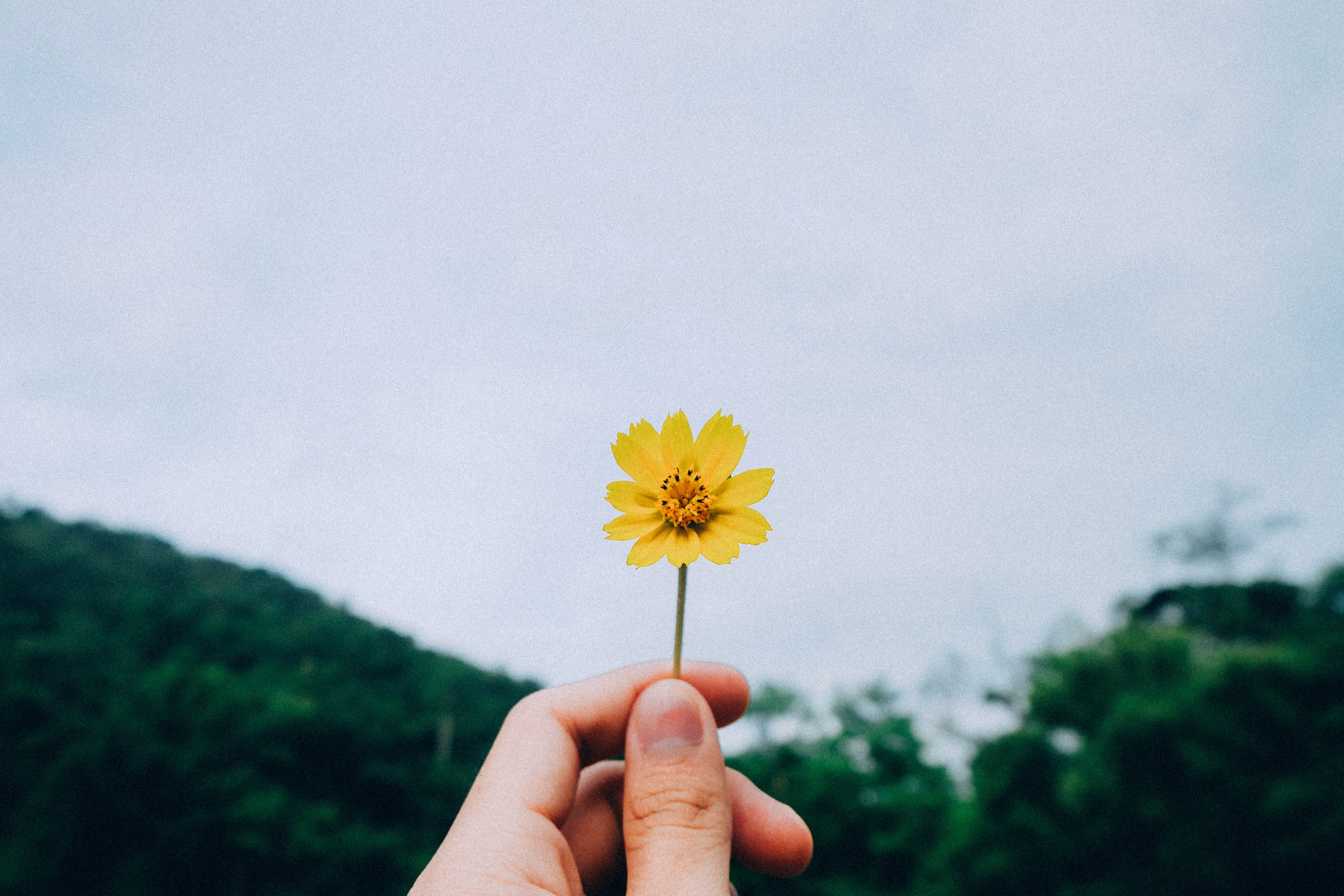 A person's hand holding up a small yellow flower