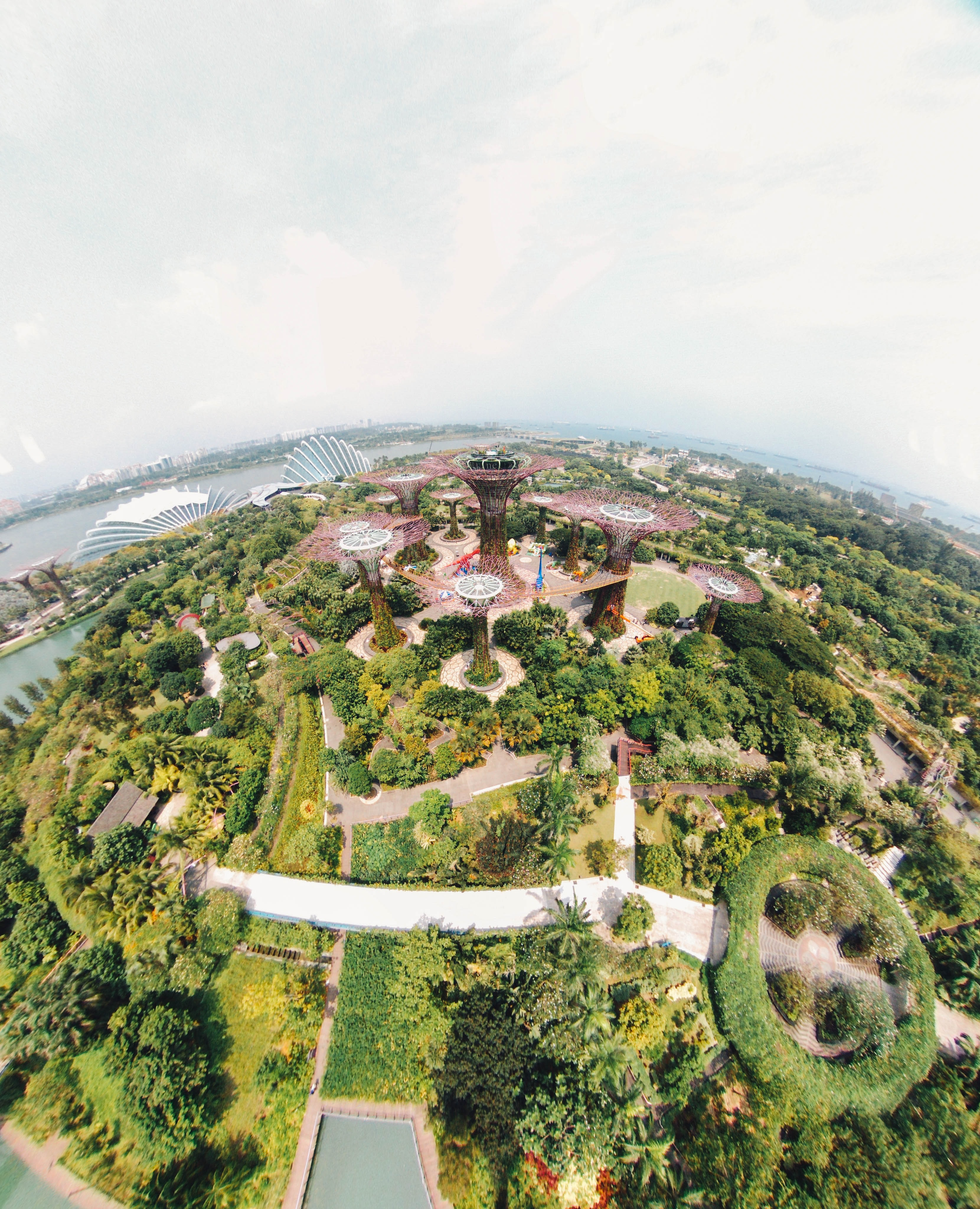 aerial view photography of Gardens by the Bay, Singapore