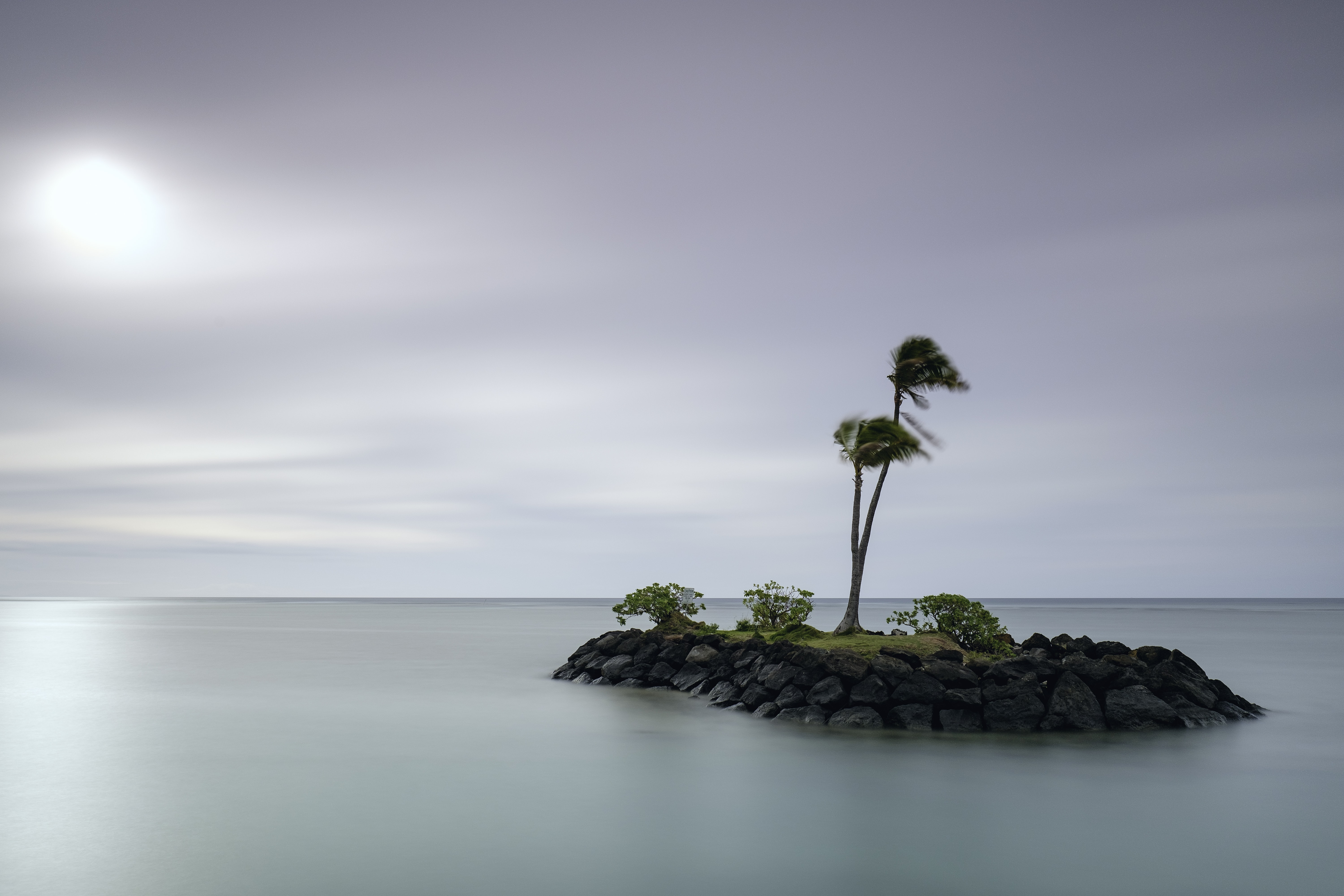 green coconut tree on island at daytime