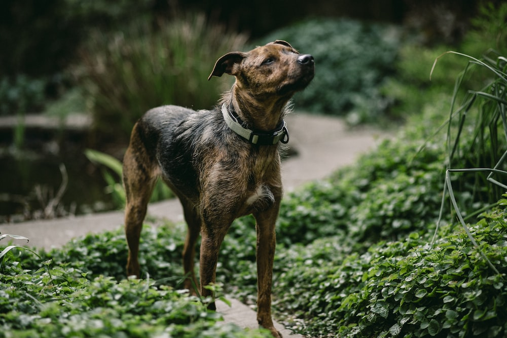 brown and black dog standing on grass field