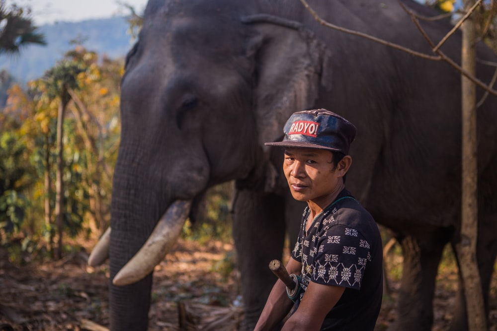 man sitting near black elephant