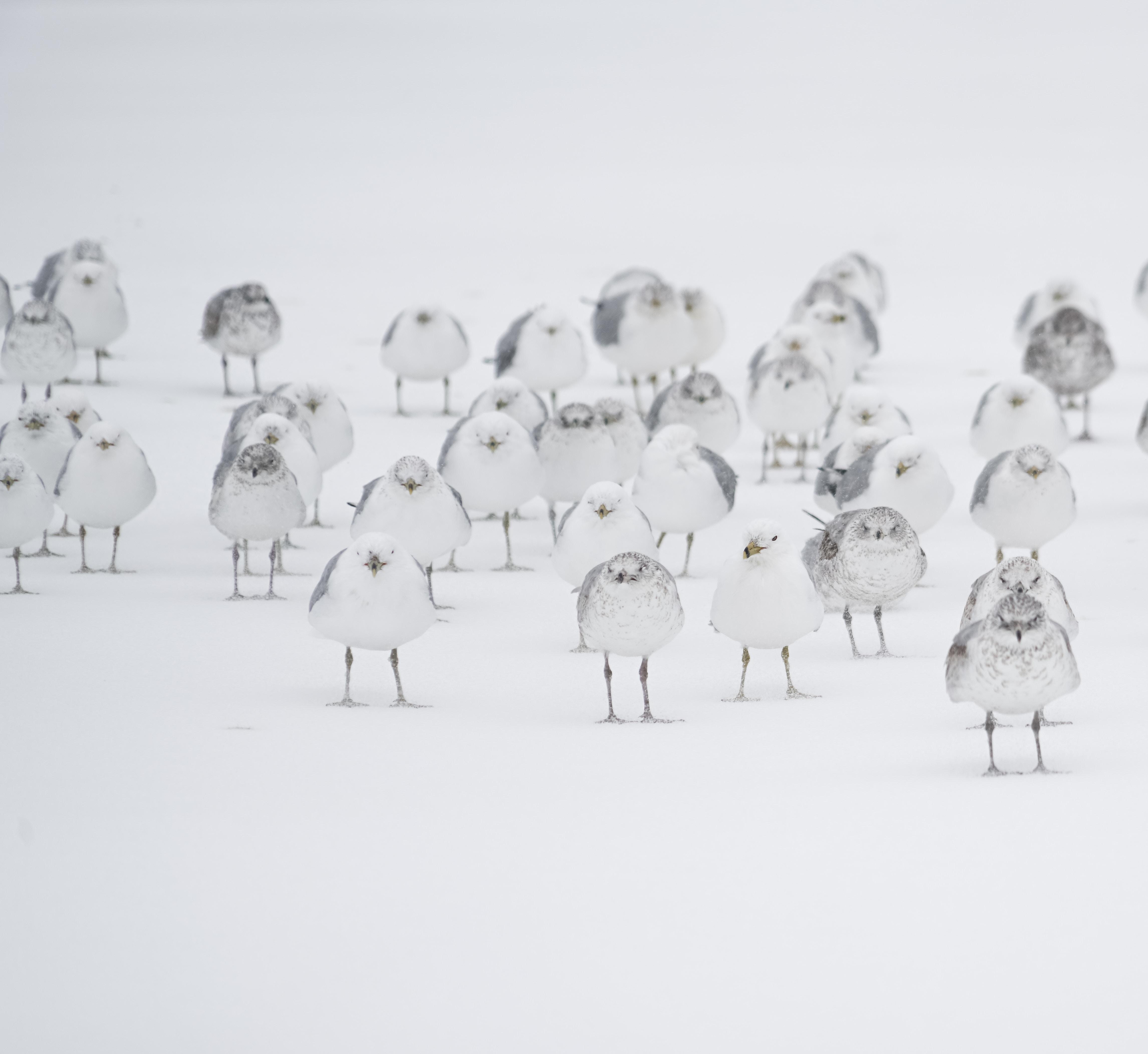 white birds on white flooring